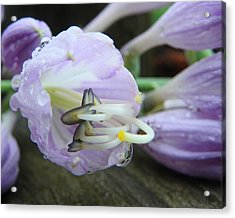 Acrylic Print featuring the photograph Delicate Beauty by Chad and Stacey Hall