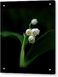 Acrylic Print featuring the photograph Delicate Beauty by Marija Djedovic