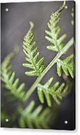 Acrylic Print featuring the photograph Delicate by Carole Hinding