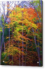 Delicate Colors Acrylic Print by Vijay Sharon Govender