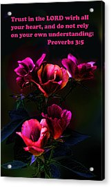 Delicate Dark Pink Roses Pro. 3v5 Acrylic Print by Linda Phelps