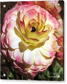 Delicate Delight Acrylic Print by Therese Alcorn