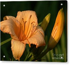 Delicate Flower Acrylic Print