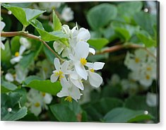Acrylic Print featuring the photograph Delicate White Flower by Jennifer Ancker