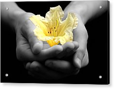 Delicate Yellow Flower In Hands Acrylic Print