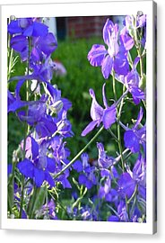 Acrylic Print featuring the photograph Delicately Blue by Frank Wickham