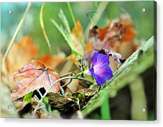 Delight In Disorder Acrylic Print by Rebecca Sherman
