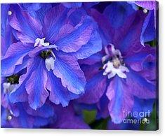 Delightful Delphinia Flowers Acrylic Print by Sabrina L Ryan