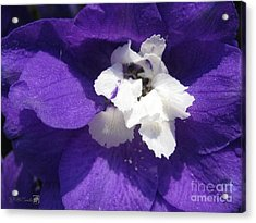 Acrylic Print featuring the photograph Delphinium Named Blue With White Bee by J McCombie