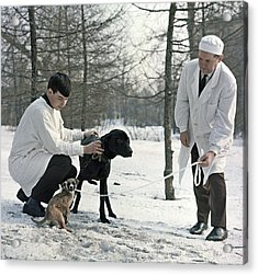 Demikhov's Laboratory Dogs, 1967 Acrylic Print by Ria Novosti
