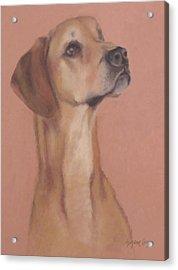 Demo The Hero Dog Acrylic Print