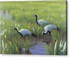 Demoiselle Cranes In Spring Acrylic Print by Jon Janosik