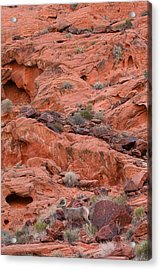 Desert Bighorn And Landscape Acrylic Print by Nathan Mccreery