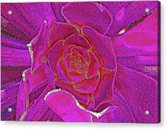 Desert Bloom Acrylic Print by James Mancini Heath