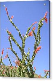 Desert Bloom Acrylic Print by