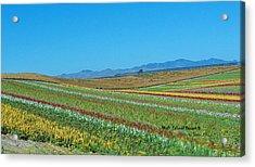Desert Colors 3 Acrylic Print by Jean Paul LeBlanc