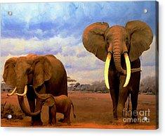Desert Elephants Acrylic Print
