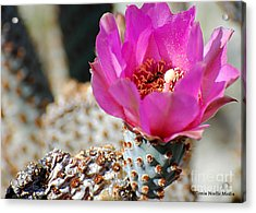 Acrylic Print featuring the photograph Desert Rose by Tonia Noelle