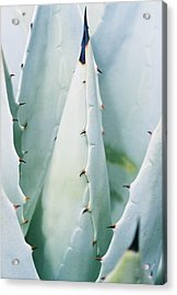 Desert Safety Acrylic Print by