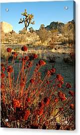 Acrylic Print featuring the photograph Desert Surprise by Johanne Peale