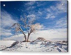 Desert Tree In White Sands Acrylic Print by Ralf Kaiser