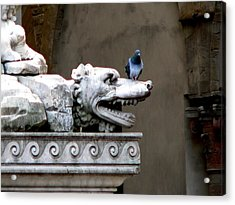 Despised Pigeon Acrylic Print by Eric Tressler