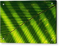 Detail Of A Large Leaf With Shadows Acrylic Print by Bill Curtsinger