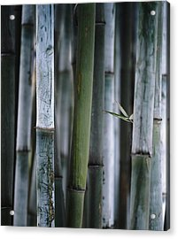 Detail Of Green Bamboo In Bamboo Park Acrylic Print by Axiom Photographic