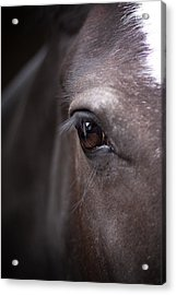 Detailed Close Up Of Black Horse's Eye Acrylic Print