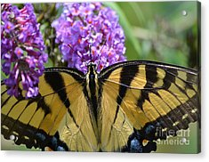 Detailed Wings Acrylic Print by Kathy Gibbons