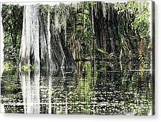 Details Of A Florida River Acrylic Print
