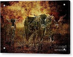 Devil's Herd - Texas Longhorn Cattle Acrylic Print