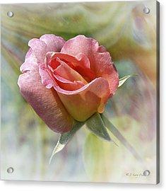 Dew Drop Pink Rose Acrylic Print