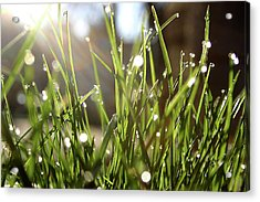 Acrylic Print featuring the photograph Dew by Emanuel Tanjala