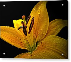 Acrylic Print featuring the photograph Dew On The Daylily by Debbie Portwood