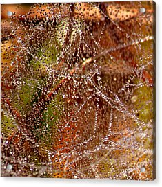 Dewdrops - Colorful Abstract Acrylic Print by Carol Groenen