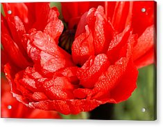 Acrylic Print featuring the photograph Dewdrops by Fotosas Photography