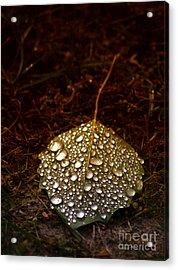 Dewdrops Acrylic Print