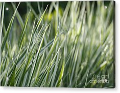 Acrylic Print featuring the photograph Dews by Yumi Johnson