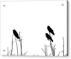 Did You Hear That Acrylic Print by Tom McCarthy