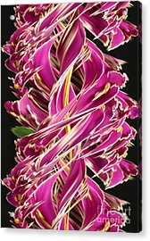Digital Streak Image Of African Violets Acrylic Print by Ted Kinsman