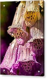 Digitalis Acrylic Print