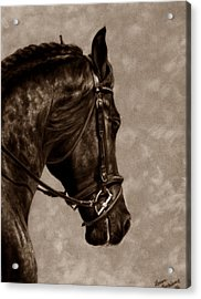 Dignified Classic Acrylic Print