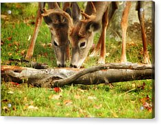 Dining Together Acrylic Print by Karol Livote