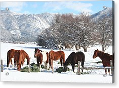 Dinner Time In The Snow Acrylic Print