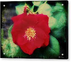 Dirty Rose Knows Acrylic Print by Bill Cannon