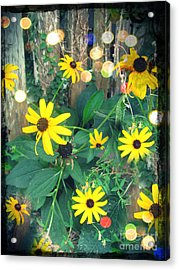 Acrylic Print featuring the photograph Dirty Susan by Laura Brightwood