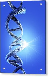 Dna Helical Structure, Artwork Acrylic Print by Victor Habbick Visions
