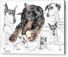 Acrylic Print featuring the drawing Dober-thoughts - Doberman Pinscher Montage Print Color Tinted by Kelli Swan