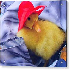 Acrylic Print featuring the painting Dodo With Red Hat by Bogdan Floridana Oana
